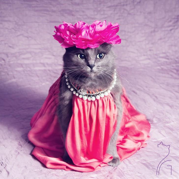 Принцесса в розовом — кошка Пицуш.