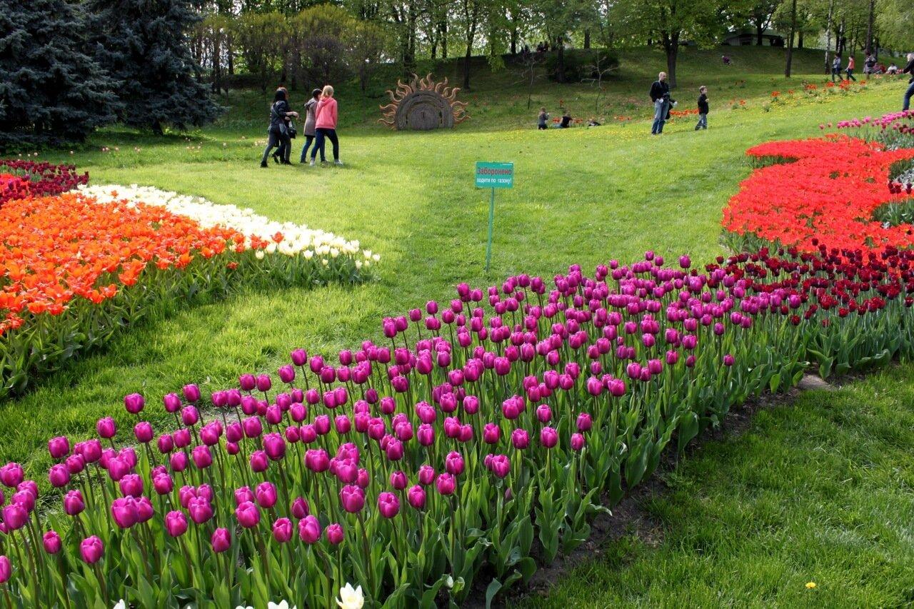 Выставка весенних цветов в Киеве