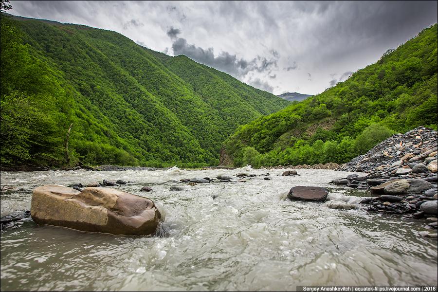Цой-Педе, Чечня