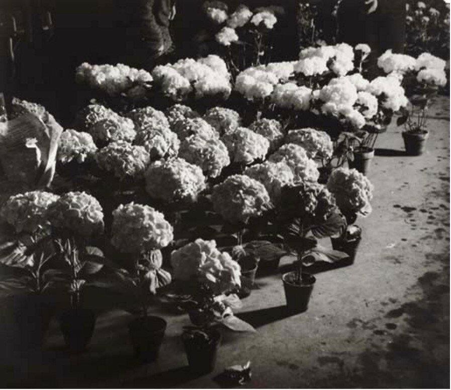 1932. Цветочный рынок