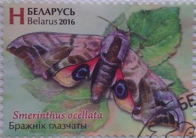 2016 бабочка бражник глазчаты Н