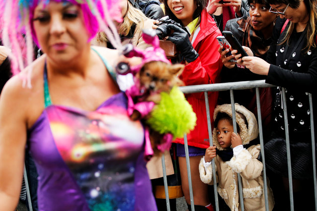 People try to take a look during the annual halloween dog parade at Manhattan's Tompkins Square