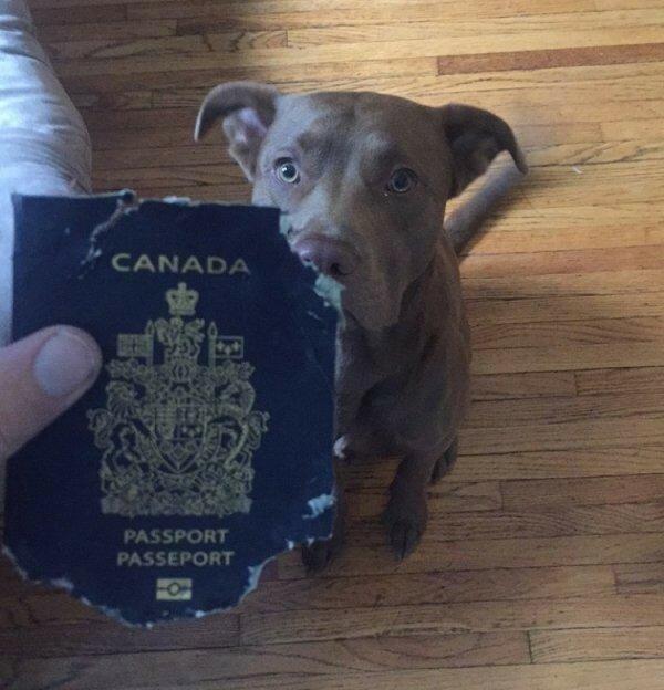 Картинки паспорт прикол