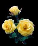 Roses_jaunes_by_CibiBijoux.png