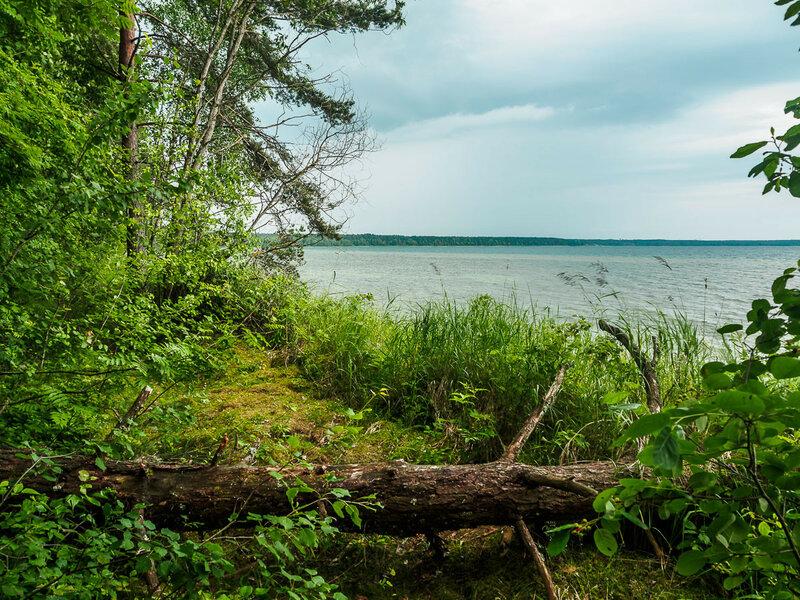 На берегу лес, пробираться порой приходится через поваленные стволы.