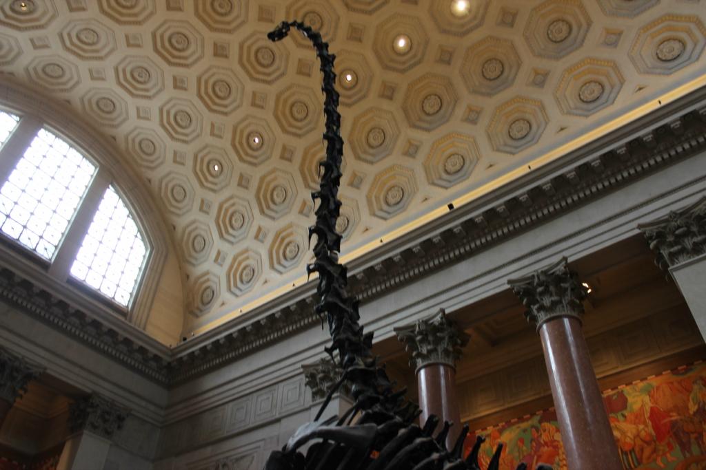 Американский музей естественной истории в Нью-Йорке (Мир глазами дочери)