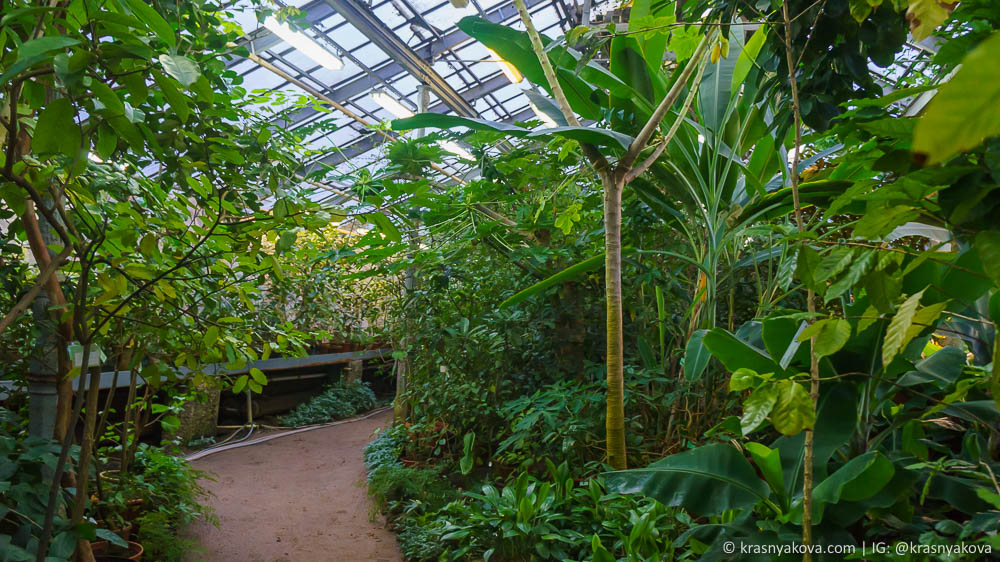 botanical_garden_spb_42.jpg
