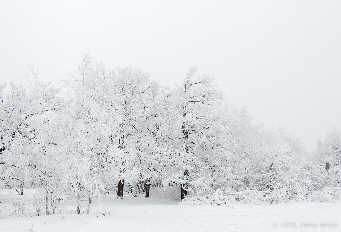 зима лес кумысная поляна фото 1