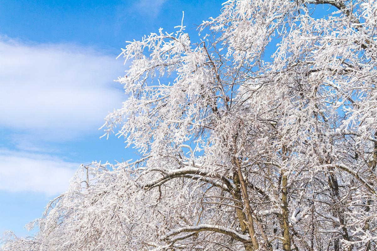 Зима кумысная поляна фото 5