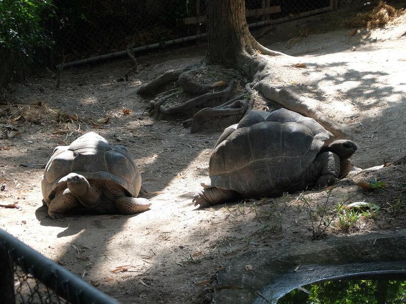 Чиангмай - Зоопарк - Большие черепахи