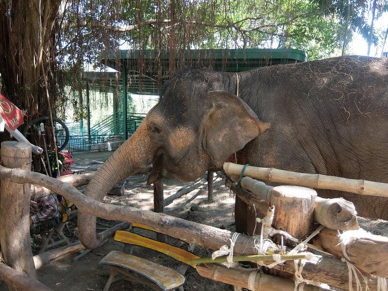 Чиангмай - Зоопарк - Слоненок