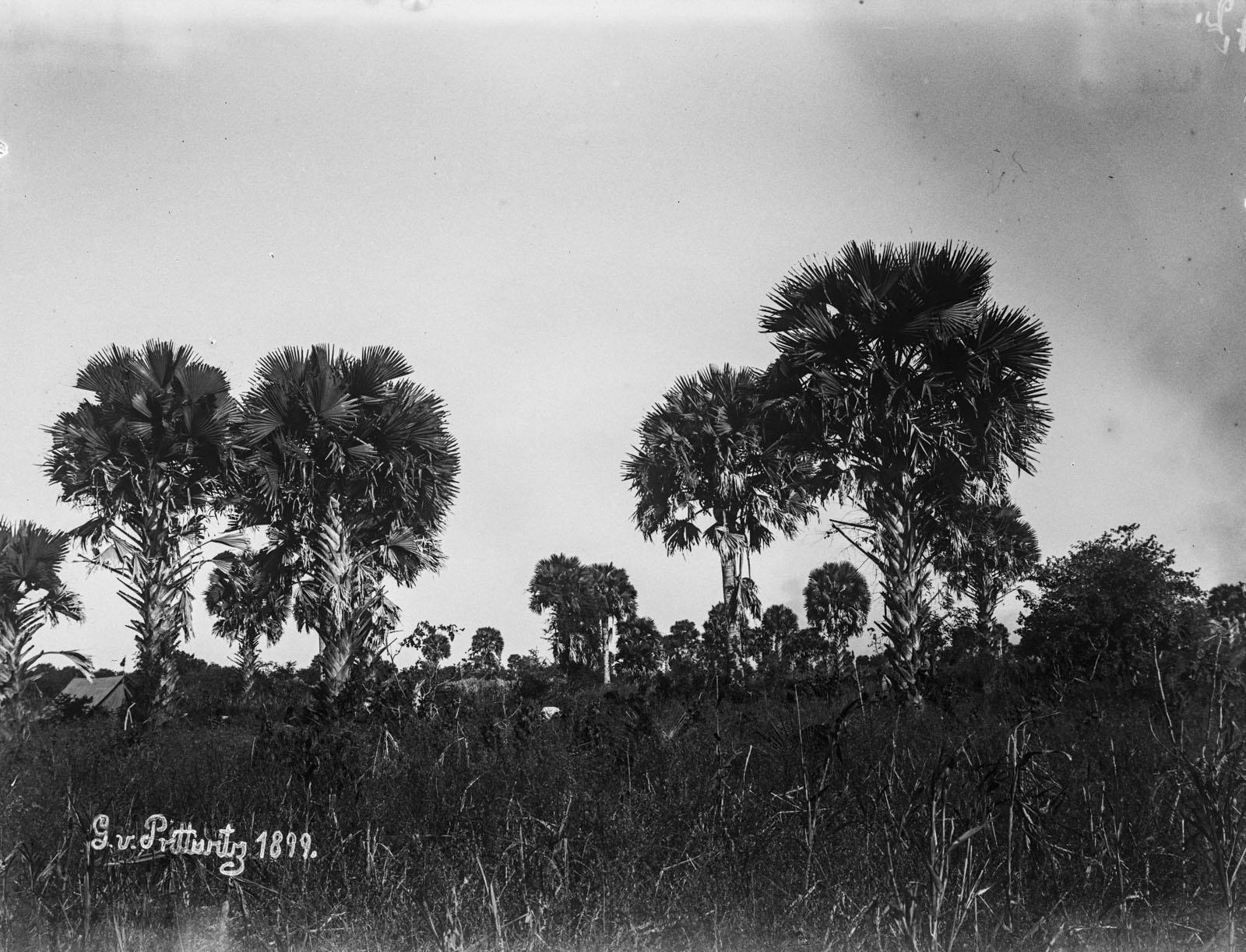 20. 1899. Отдаленный вид домов возле Руквы