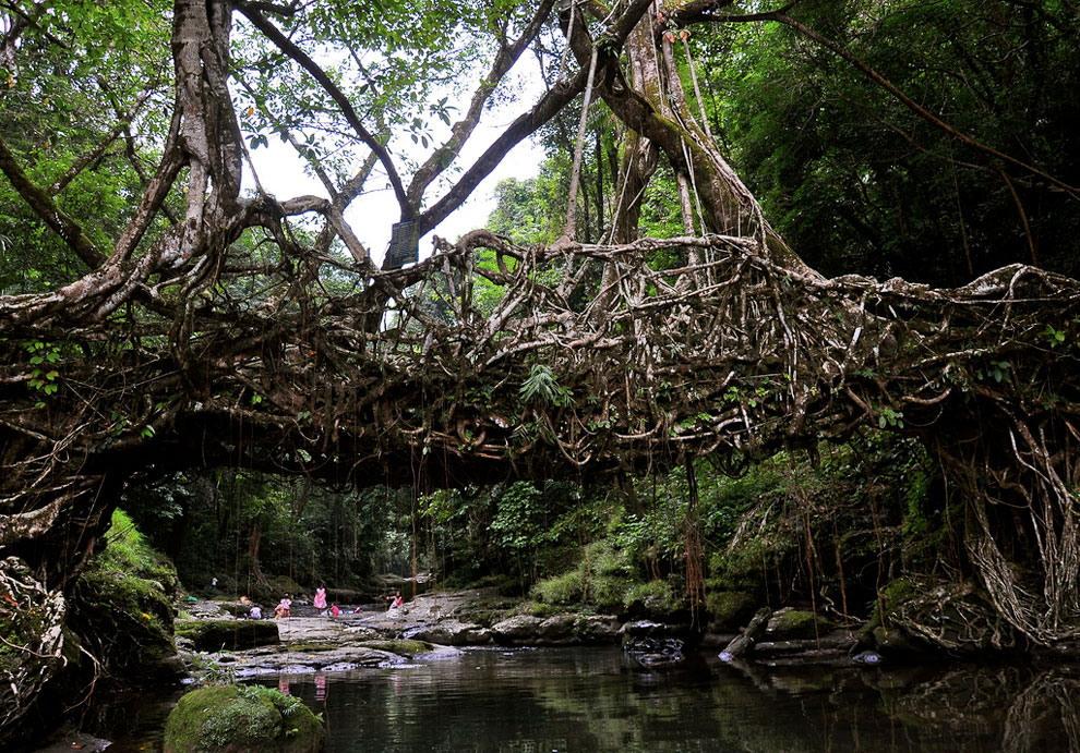 «Живые мосты» в Индии