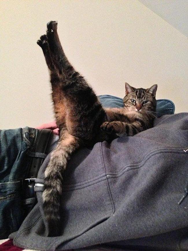 Веселые картинки животные коты прикол смешное фотоподборка юмор