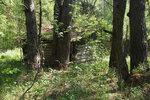 [2017] За Быкасово в лесу