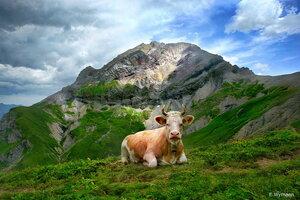 на страже гор