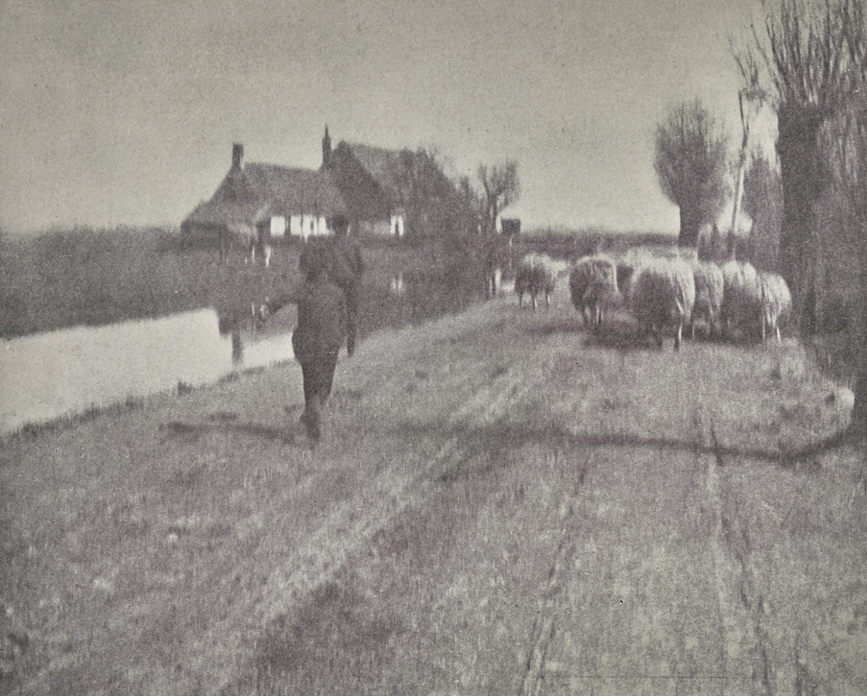 1902. Возвращение с пастбища
