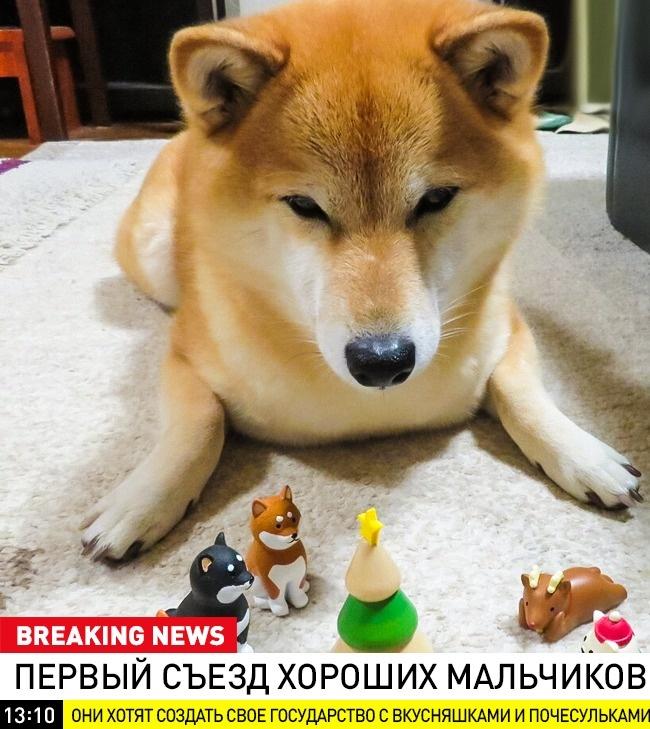© breaking_animal / vk