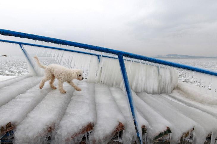 Коллапс в Европе: холода и снегопады (25 фото)