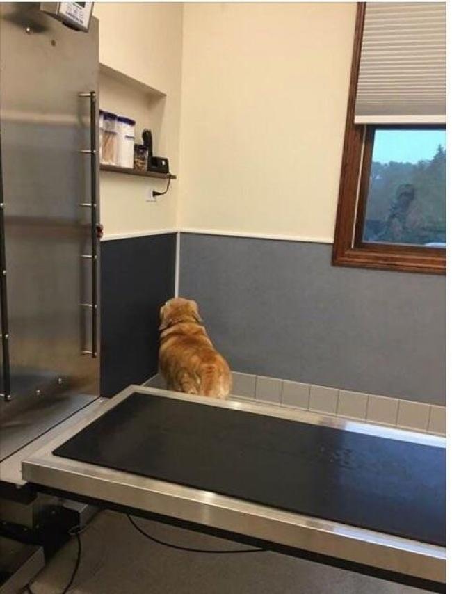 животные ветеринары ветеринар больница питомцы стрижки размер забота