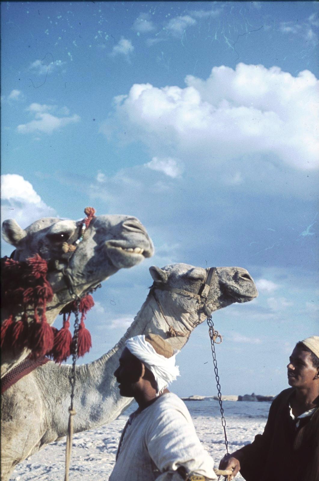 Погонщики верблюдов