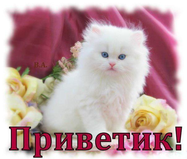 Открытки. Международный день приветствий. Киса с цветами