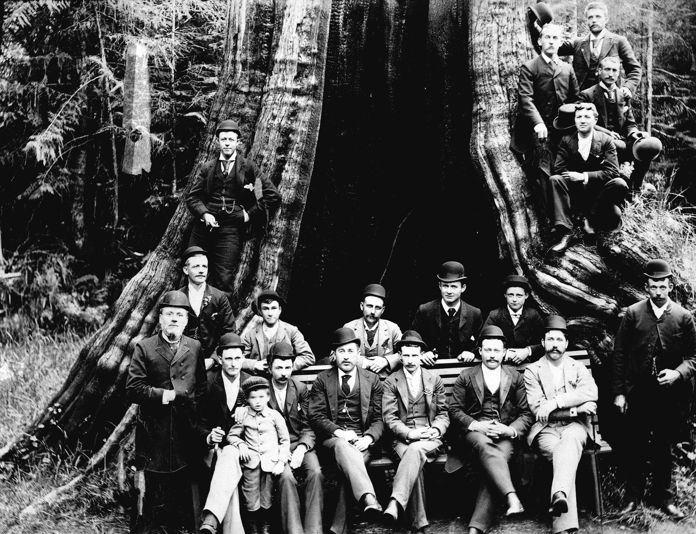Кедровое дерево 60 футов в окружности, Стэнли-Парк, Ванкувер, Британская Колумбия