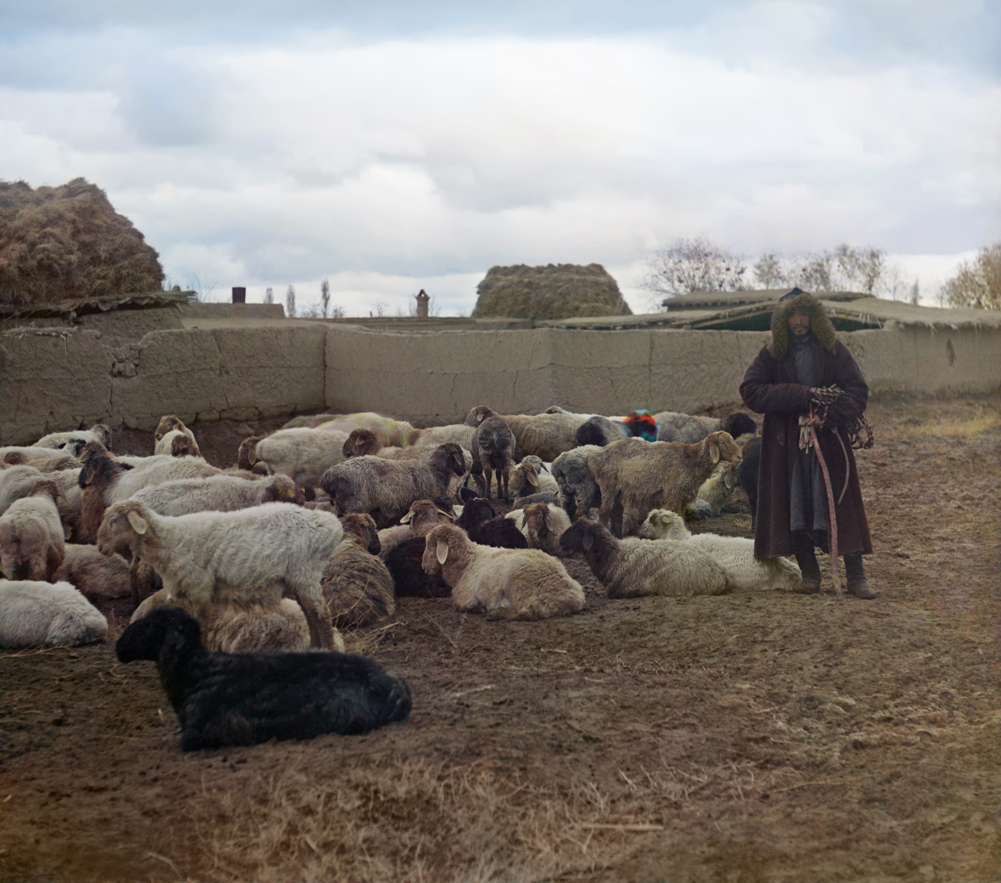 Окрестности Самарканда. Голодная степь. Курдючные овцы