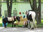 35 2014_06_21  14.19.27  Три лошадки в парке имени Гагарина.jpg