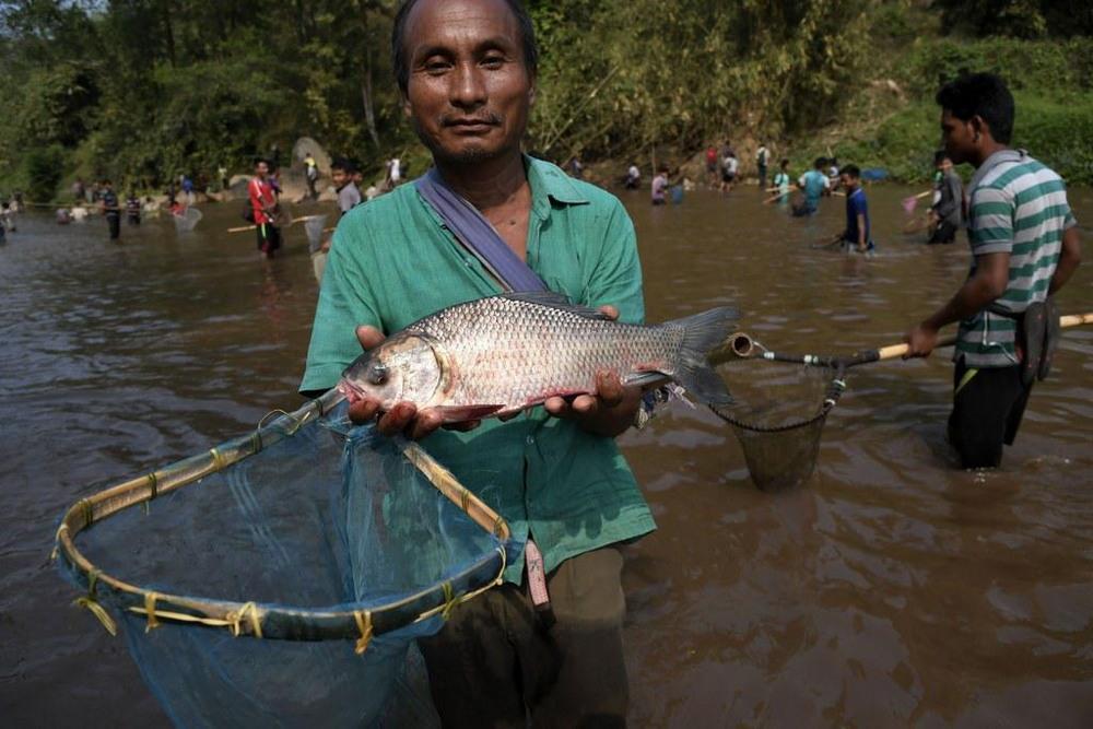 Традиционная ловля рыбы в индийской реке людей, жители, бросают, сочками, добычей, легкой, становится, поверхность, всплывает, Отравленная, безопасен, дыхание, парализует, дерева, индийских, ядовитого, корни, размельчают, Мегхалая, Ассам