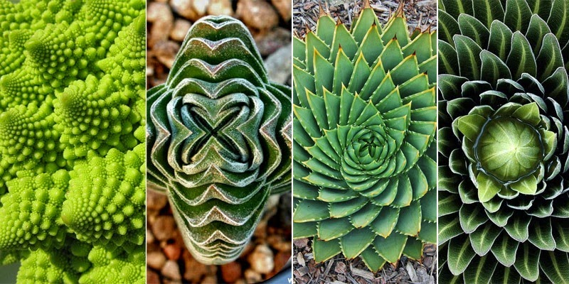 PlantsGeometry00.jpg