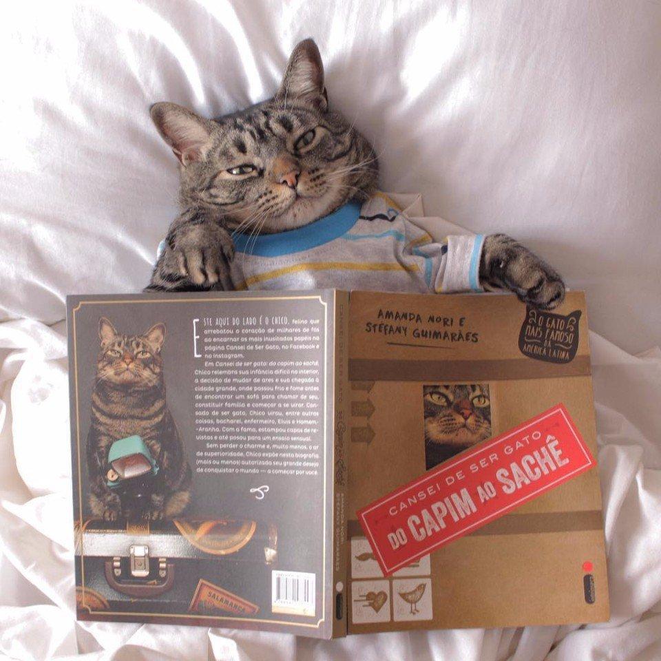 Кот Чико (Chico) в своих оригинальных образах набирает невероятную популярность