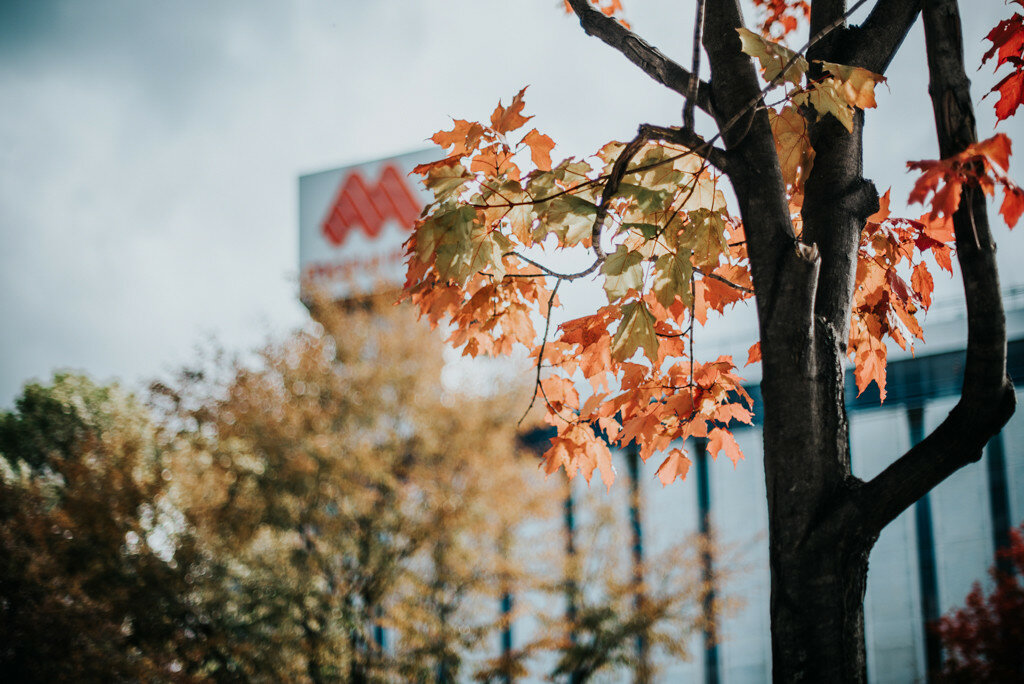 Осень в Саппоро