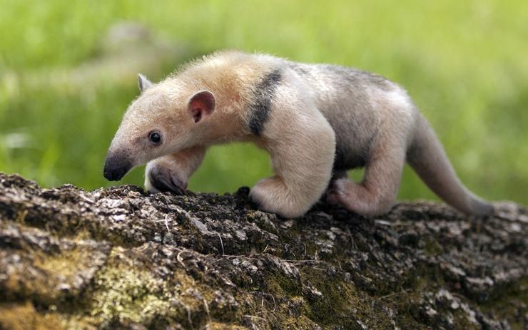 Милые существа, созданные природой