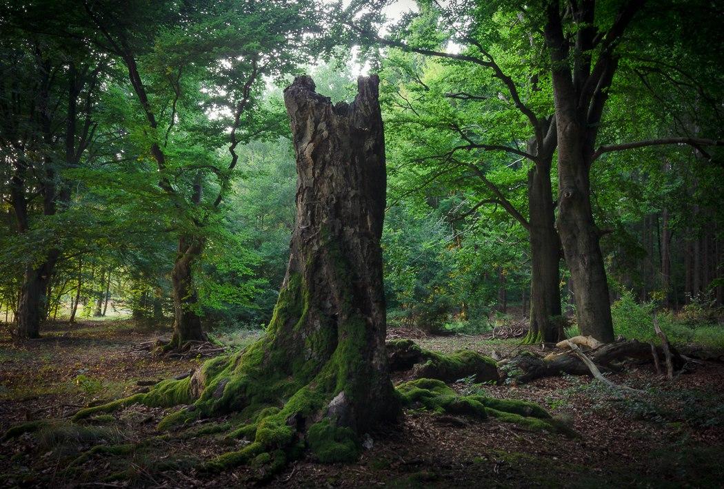 Волшебные фотографии лесов в Германии Алекса Веше (Alex Wesche) (10 фото)