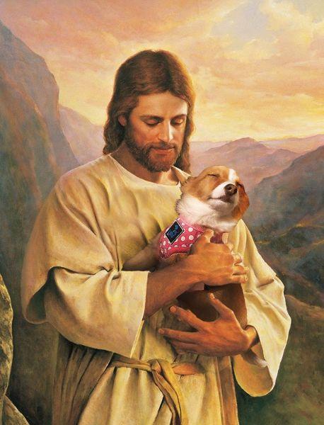 мемы собака пес прикольный пес собаки юмор собаки