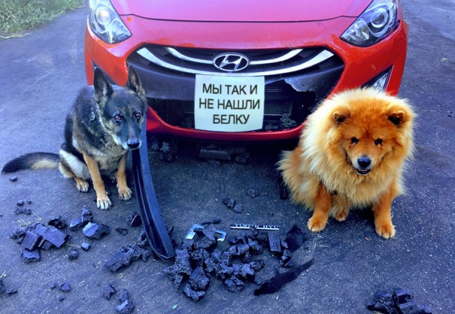 Наверное эти собаки, так больше не будут (17 фото)