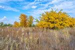 Осень в астраханской саванне