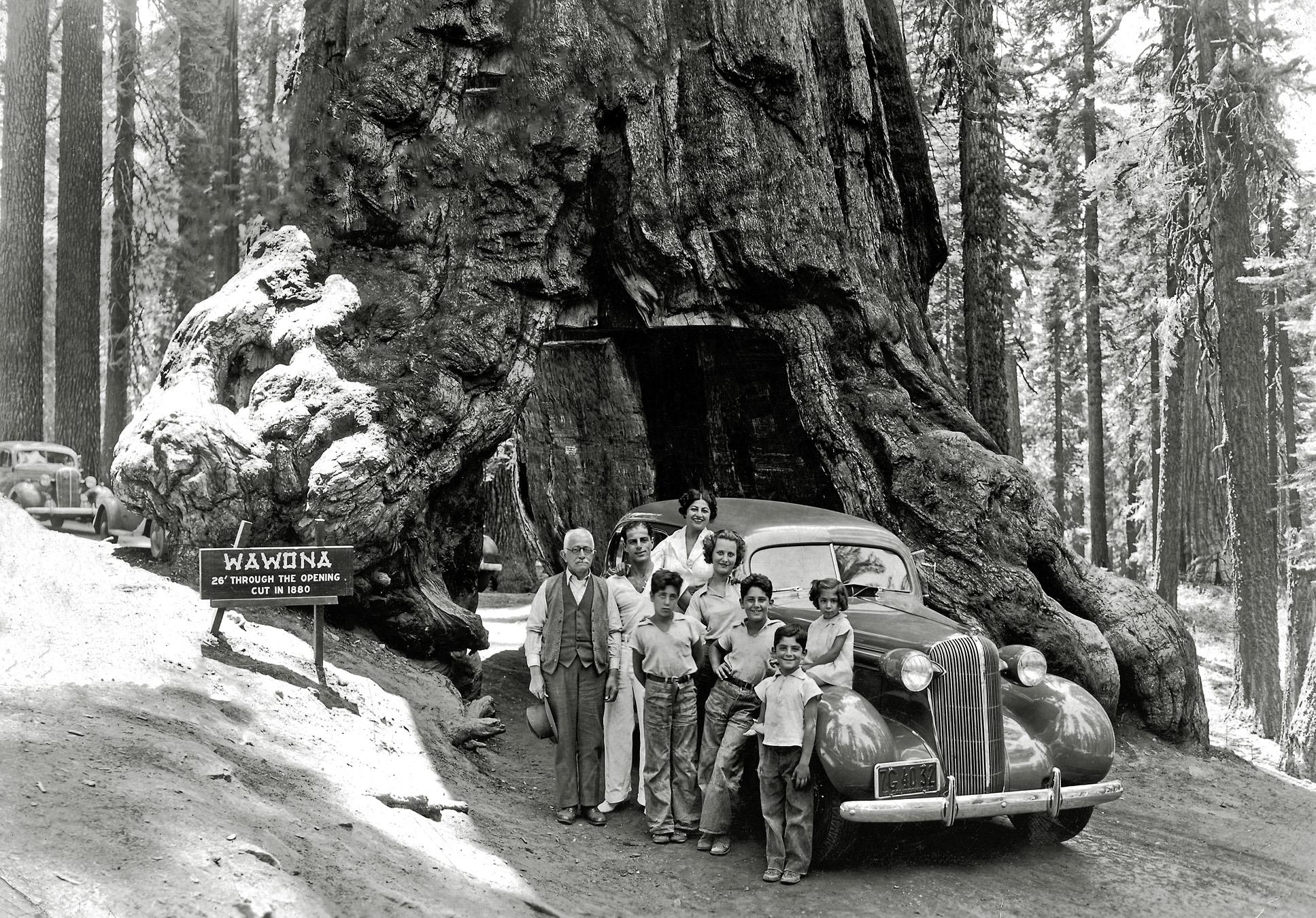 1936. Возле Дерева Уавона