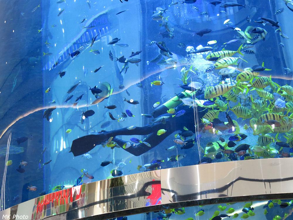 Аквалангист в аквариуме