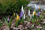 Весна в саду - 17 апреля 2017
