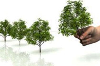 14 мая День посадки леса