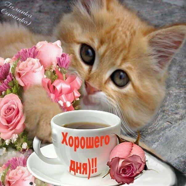 с добрым утром картинки котята красивые словами, необходимо