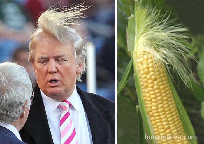 Дональд Трамп или кукурузный початок?