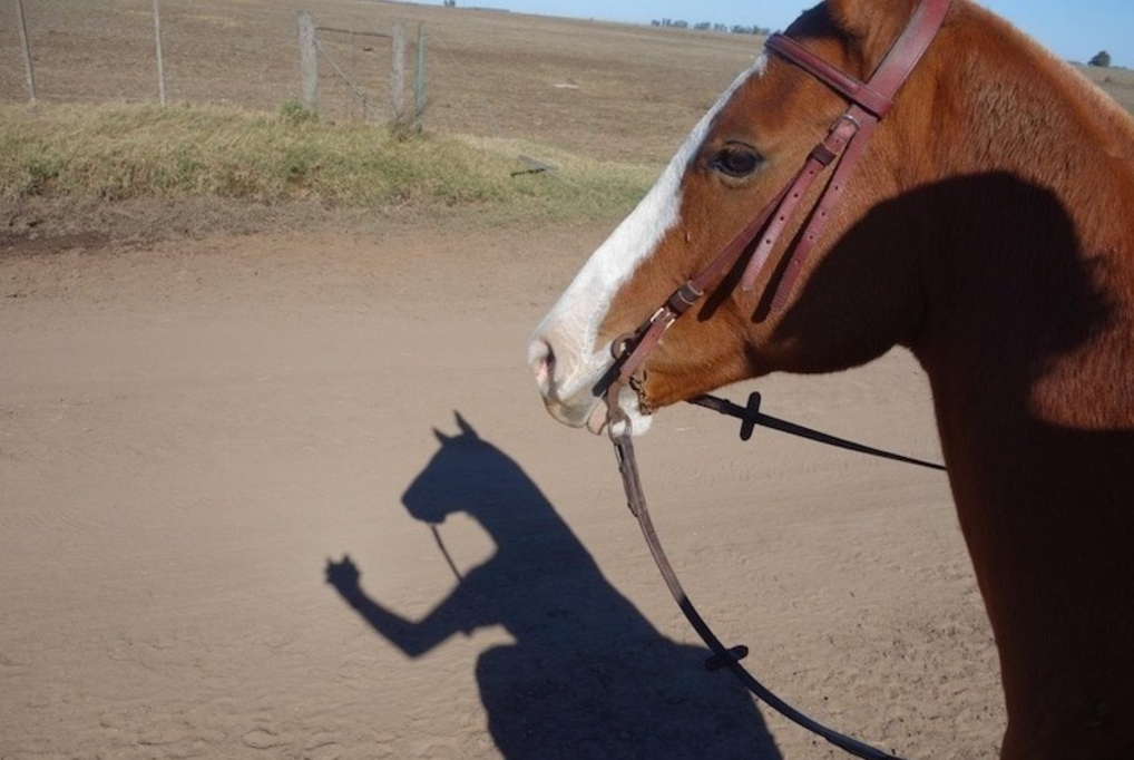 Лошадь с рукой.