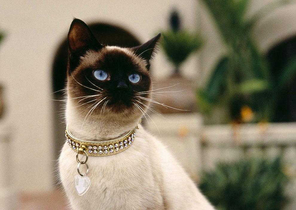 С точки зрения кошки, самое уютное место в доме — место, на котором в данный момент