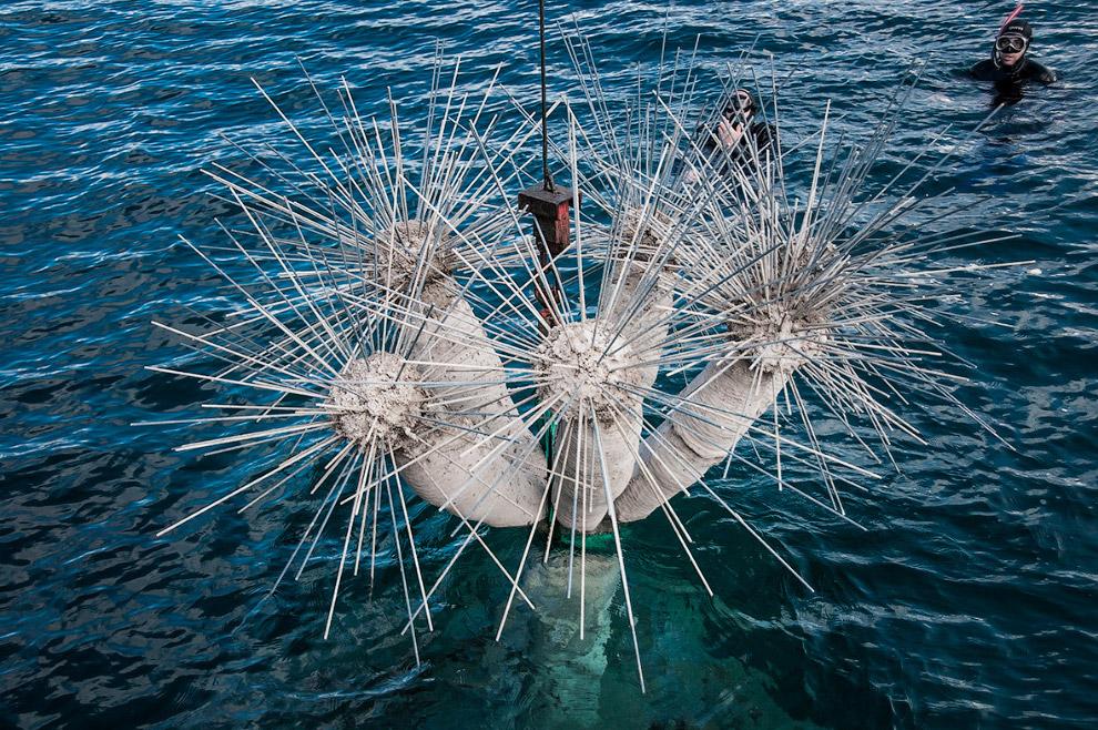 По словам скульптора и создателя Джейсона Тейлора, музей послужит диалогом между искусством и природ