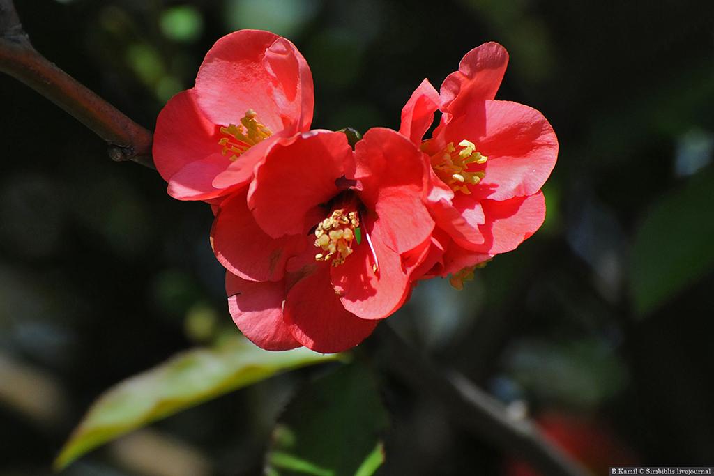 Весеннее цветенеие