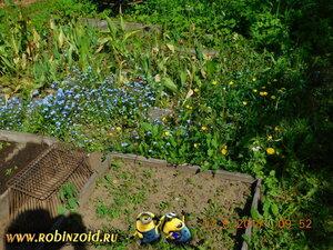 сорняки на дорожке