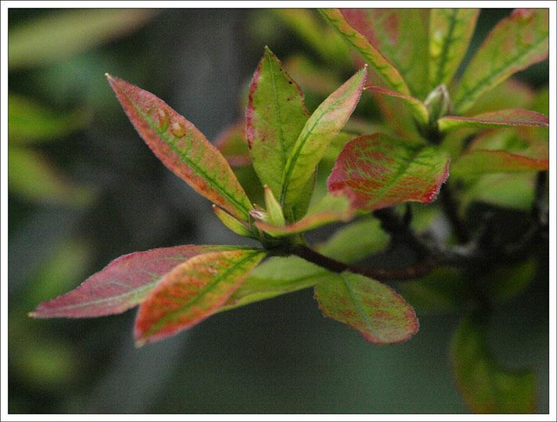 106_Leaf.jpg